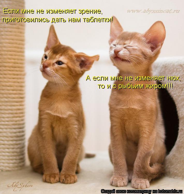 Котоматрица: Если мне не изменяет зрение, приготовились дать нам таблетки! А если мне не изменяет нюх, то и с рыбьим жиром!!!