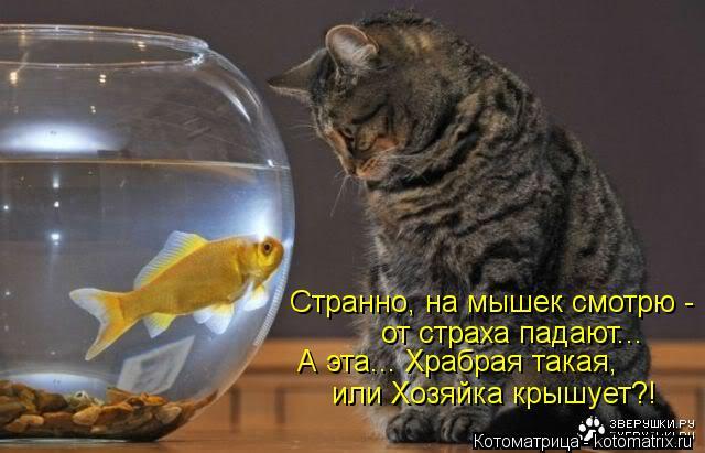 Котоматрица: Странно, на мышек смотрю - от страха падают... А эта... Храбрая такая, или Хозяйка крышует?!