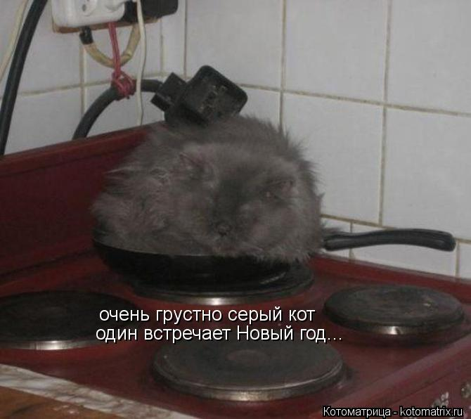 Котоматрица: очень грустно серый кот один встречает Новый год...