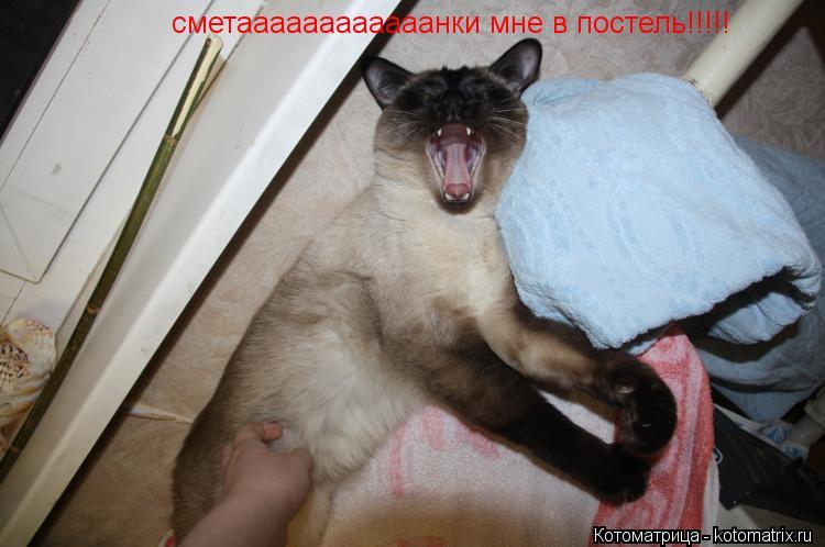 Котоматрица: сметаааааааааааанки мне в постель!!!!!