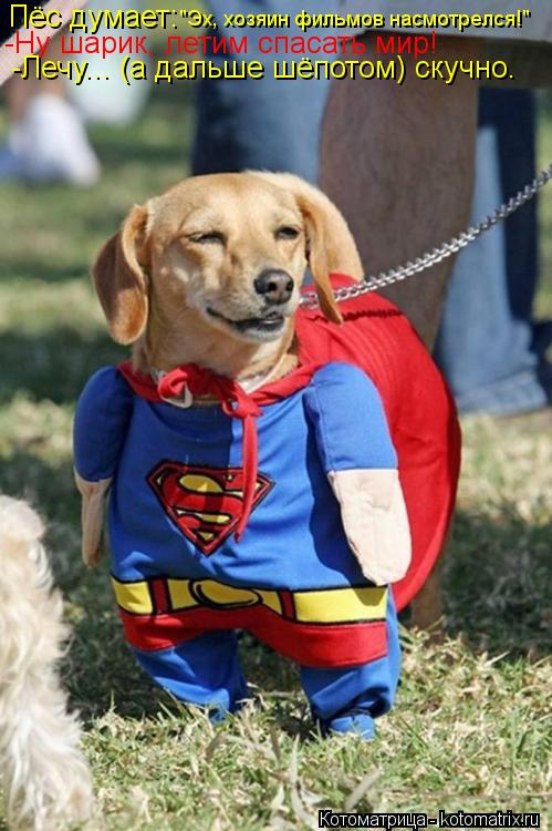 """Котоматрица: Пёс думает: """"Эх, хозяин фильмов насмотрелся!"""" -Ну шарик, летим спасать мир! -Лечу... (а дальше шёпотом) скучно."""