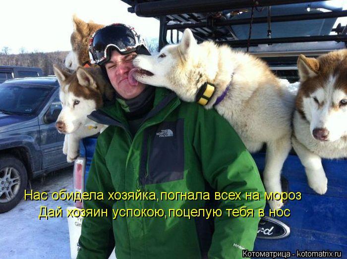 Котоматрица: Нас обидела хозяйка,погнала всех на мороз Дай хозяин успокою,поцелую тебя в нос