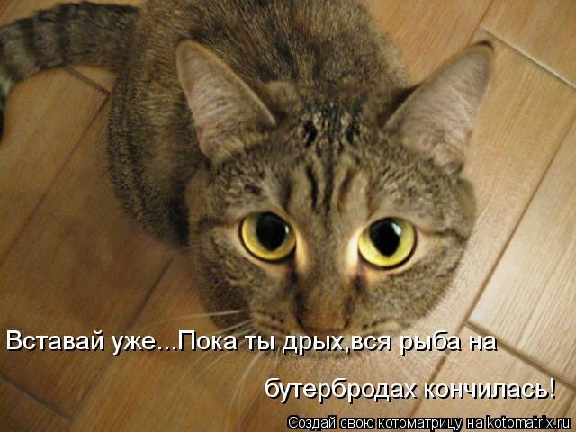 Котоматрица: Вставай уже...Пока ты дрых,вся рыба на бутербродах кончилась!