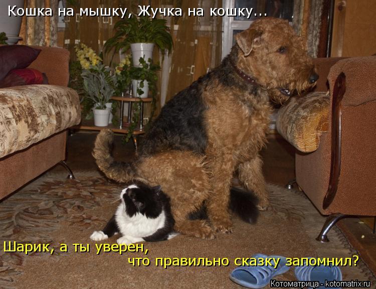 Котоматрица: Кошка на мышку, Жучка на кошку... Шарик, а ты уверен, что правильно сказку запомнил?