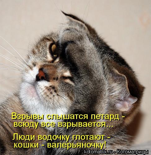 Котоматрица: Взрывы слышатся петард - кошки - валерьяночку! Люди водочку глотают - всюду все взрывается...