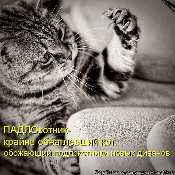Котоматрица: ПАДЛОкотник- крайне обнаглевший кот,  обожающий подлокотники новых диванов