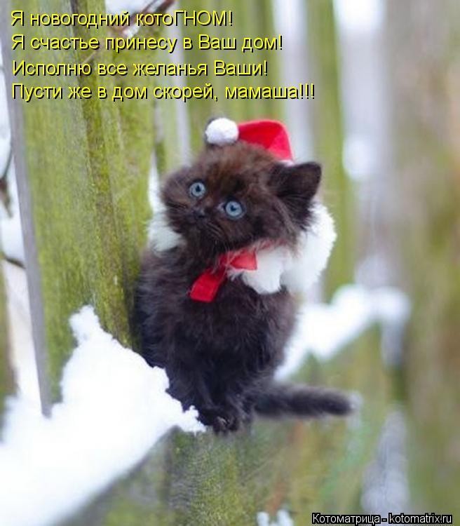 Котоматрица: Я новогодний котоГНОМ! Я счастье принесу в Ваш дом! Исполню все желанья Ваши! Пусти же в дом скорей, мамаша!!!