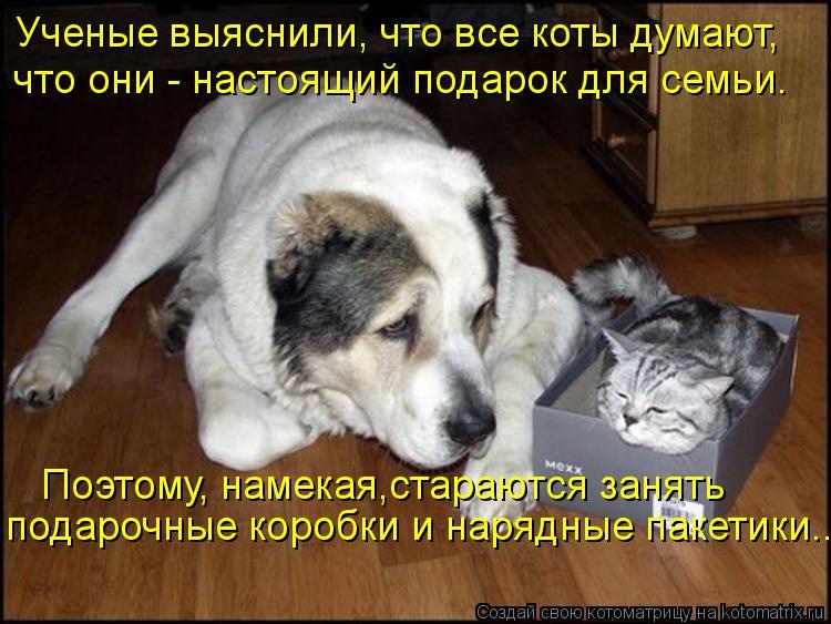 Котоматрица: Ученые выяснили, что все коты думают, что они - настоящий подарок для семьи. Поэтому, намекая,стараются занять  подарочные коробки и нарядны