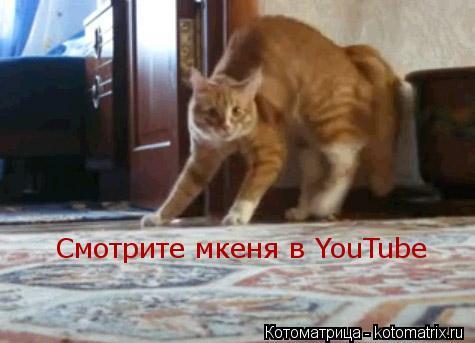 Котоматрица: Смотрите мкеня в YouTube