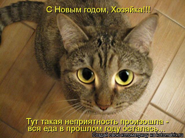 Котоматрица: С Новым годом, Хозяйка!!! Тут такая неприятность произошла -  вся еда в прошлом году осталась...