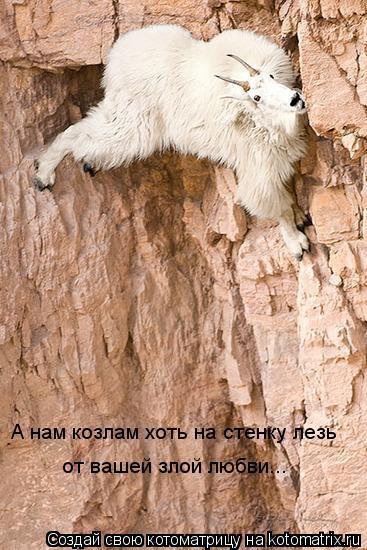Котоматрица: А нам козлам хоть на стенку лезь  от вашей злой любви...