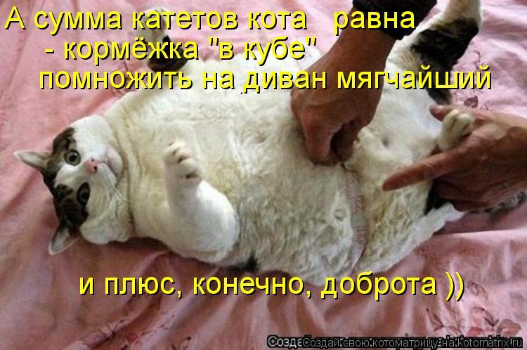 "Котоматрица: А сумма катетов кота   равна  - кормёжка ""в кубе""  помножить на диван мягчайший  и плюс, конечно, доброта ))"