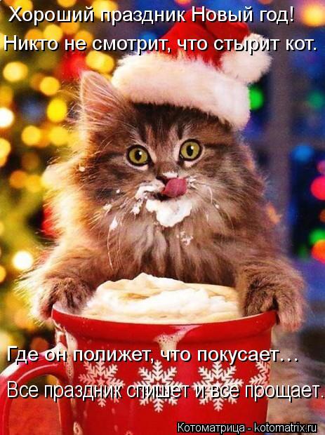Котоматрица: Хороший праздник Новый год! Никто не смотрит, что стырит кот. Где он полижет, что покусает… Все праздник спишет и все прощает.