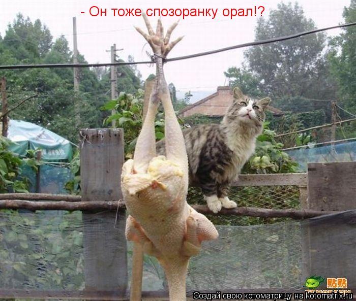 Котоматрица: - Он тоже спозоранку орал!?