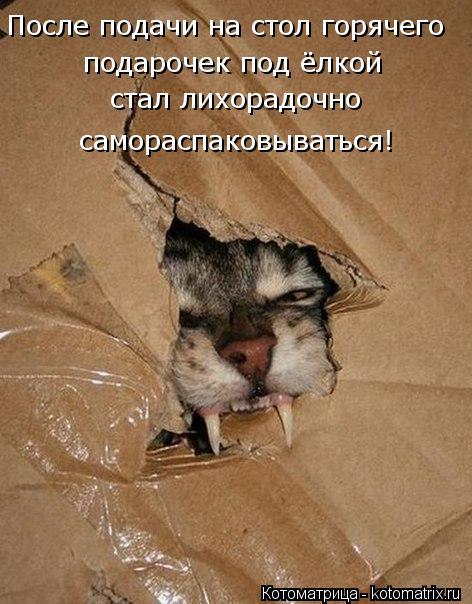 Котоматрица: После подачи на стол горячего подарочек под ёлкой  стал лихорадочно самораспаковываться!