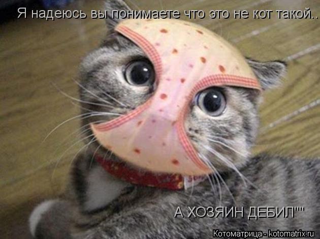 """Котоматрица: Я надеюсь вы понимаете что это не кот такой.... А ХОЗЯИН ДЕБИЛ"""""""""""