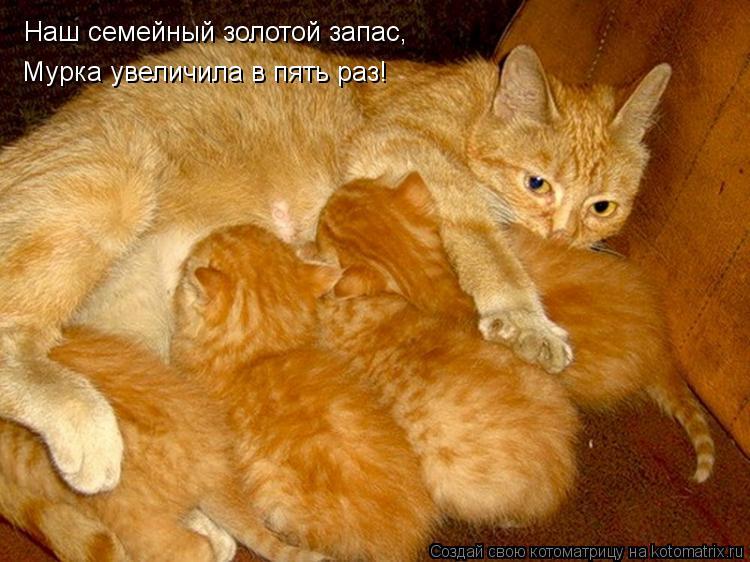 Котоматрица: Наш семейный золотой запас, Мурка увеличила в пять раз!