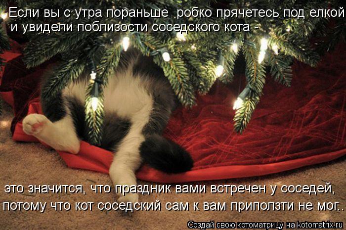 Котоматрица: Если вы с утра пораньше  робко прячетесь под елкой и увидели поблизости соседского кота - это значится, что праздник вами встречен у соседей