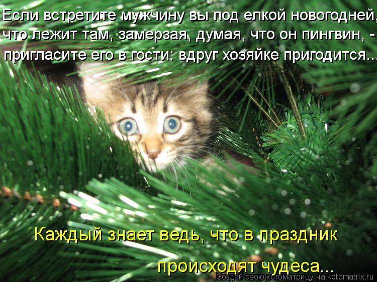Котоматрица: Если встретите мужчину вы под елкой новогодней, что лежит там, замерзая, думая, что он пингвин, - пригласите его в гости: вдруг хозяйке пригод