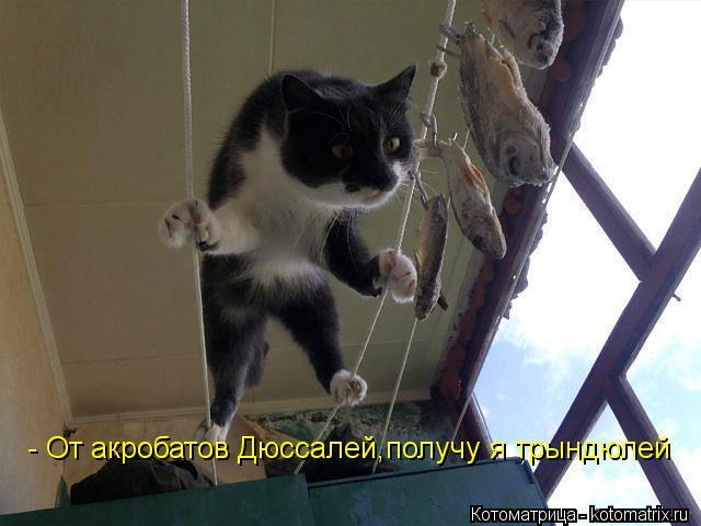 Котоматрица: - От акробатов Дюссалей,получу я трындюлей