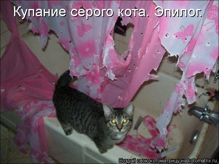 Котоматрица: Купание серого кота. Эпилог.
