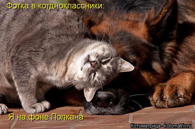 Котоматрица: Фотка в котднокласcники: Я на фоне Полкана