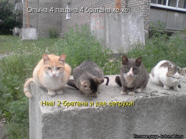 Котоматрица: Опыча 4 пацана 4 братана хе-хе Неа! 2 братана и две сетрухи!