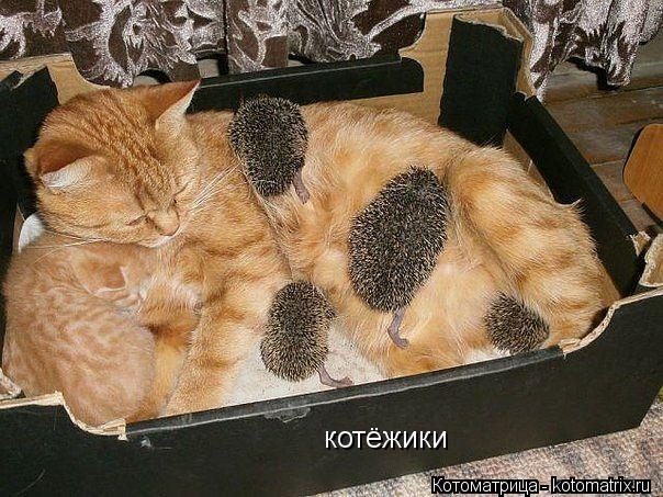 Котоматрица: котёжики