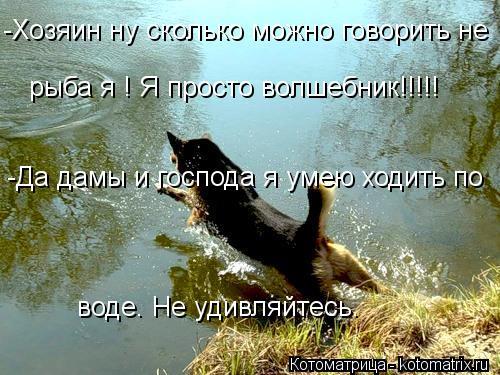 Котоматрица: -Хозяин ну сколько можно говорить не рыба я ! Я просто волшебник!!!!! -Да дамы и господа я умею ходить по  воде. Не удивляйтесь.