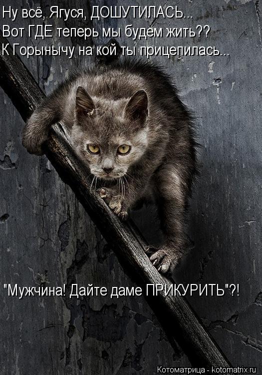 """Котоматрица: Ну всё, Ягуся, ДОШУТИЛАСЬ... Вот ГДЕ теперь мы будем жить?? К Горынычу на кой ты прицепилась... """"Мужчина! Дайте даме ПРИКУРИТЬ""""?!"""