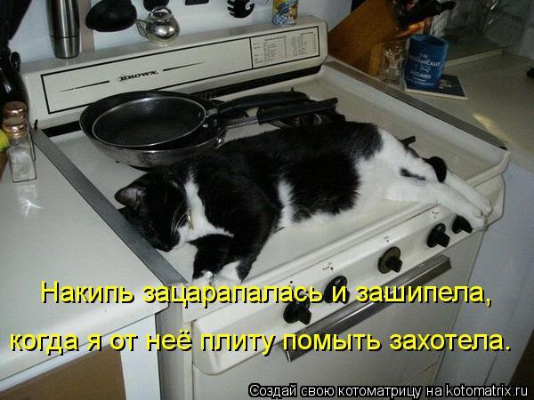 Котоматрица: Накипь зацарапалась и зашипела, когда я от неё плиту помыть захотела.