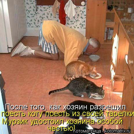 Котоматрица: После того, как хозяин разрешил поесть коту поесть из своей тарелки Мурзик удостоил хозяина особой честью!