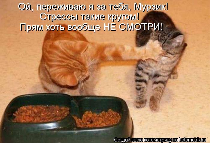 Котоматрица: Ой, переживаю я за тебя, Мурзик!  Стрессы такие кругом!  Прям хоть вообще НЕ СМОТРИ!