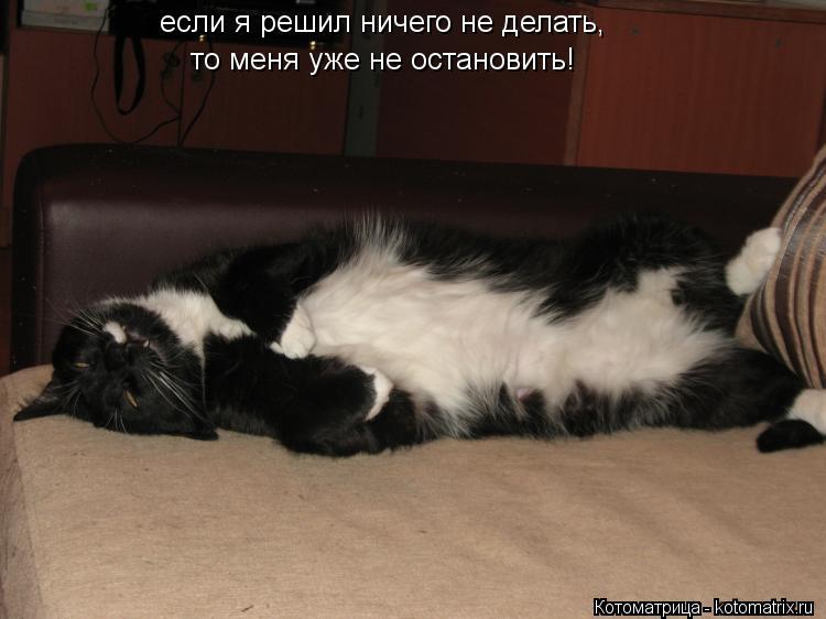 Котоматрица: если я решил ничего не делать, то меня уже не остановить!