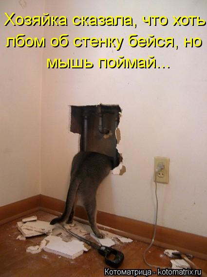Котоматрица: Хозяйка сказала, что хоть лбом об стенку бейся, но мышь поймай...