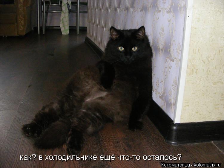 Котоматрица: как? в холодильнике ещё что-то осталось?