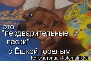"""Котоматрица: это  """"пердварительные  ласки""""  с Ёшкой горелым"""