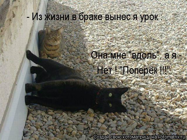 """Котоматрица: - Из жизни в браке вынес я урок : Она мне """"вдоль"""", а я - Нет ! """"Поперёк !!!"""""""