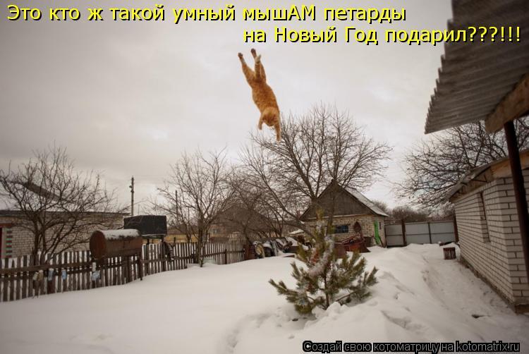 Котоматрица: Это кто ж такой умный мышАМ петарды на Новый Год подарил???!!!