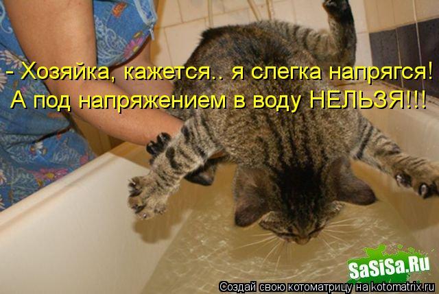 Котоматрица: - Хозяйка, кажется.. я слегка напрягся! А под напряжением в воду НЕЛЬЗЯ!!!