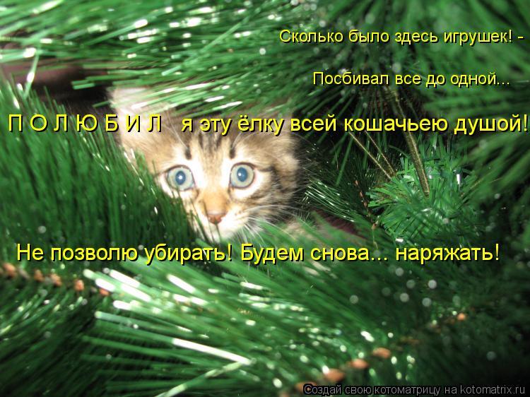 Котоматрица: П О Л Ю Б И Л   я эту ёлку всей кошачьею душой! Не позволю убирать! Будем снова... наряжать! Посбивал все до одной... Сколько было здесь игрушек! -