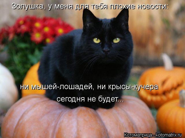 Котоматрица: Золушка, у меня для тебя плохие новости: ни мышей-лошадей, ни крысы-кучера сегодня не будет...
