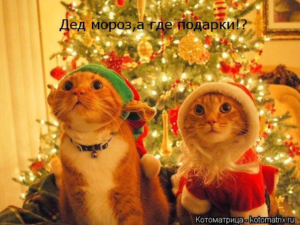 Котоматрица: Дед мороз,а где подарки!?