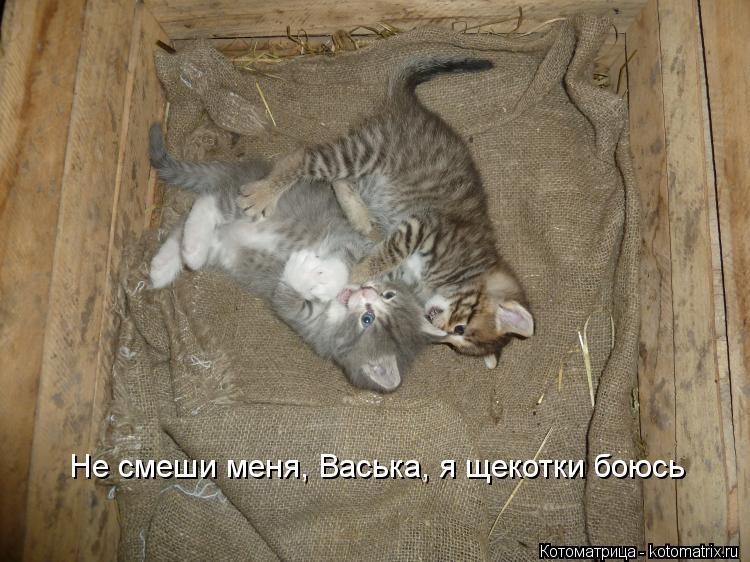 Котоматрица: Не смеши меня, Васька, я щекотки боюсь