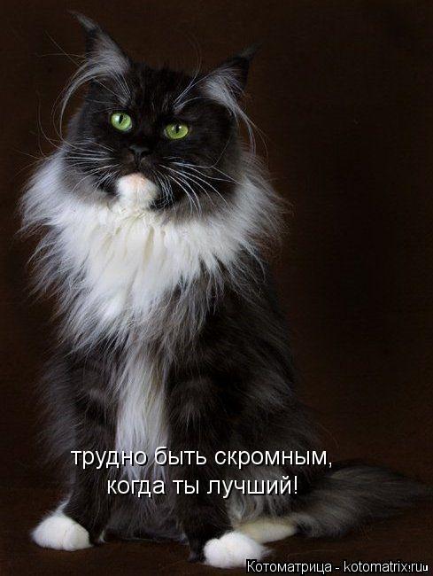Котоматрица: трудно быть скромным, когда ты лучший!
