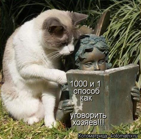 Котоматрица: 1000 и 1 способ как уговорить хозяев!!!