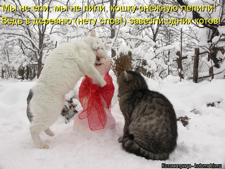 Котоматрица: Мы не ели, мы не пили, кошку снежную лепили! Ведь в деревню (нету слов!) завезли одних котов!