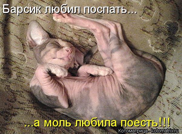 Котоматрица: Барсик любил поспать... ...а моль любила поесть!!!