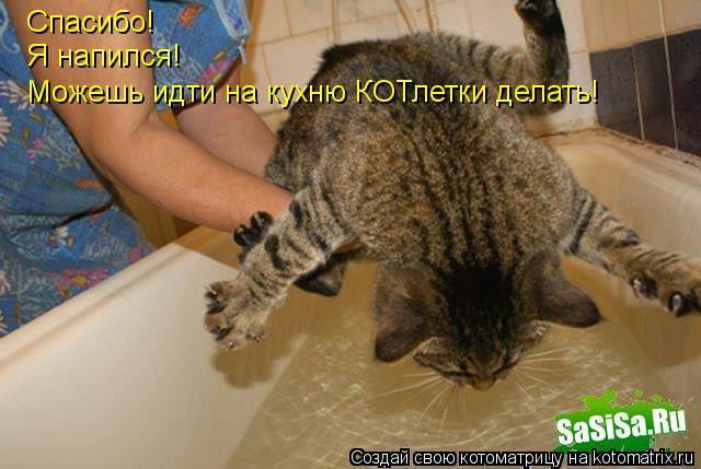 Котоматрица: Спасибо! Я напился! Можешь идти на кухню КОТлетки делать!