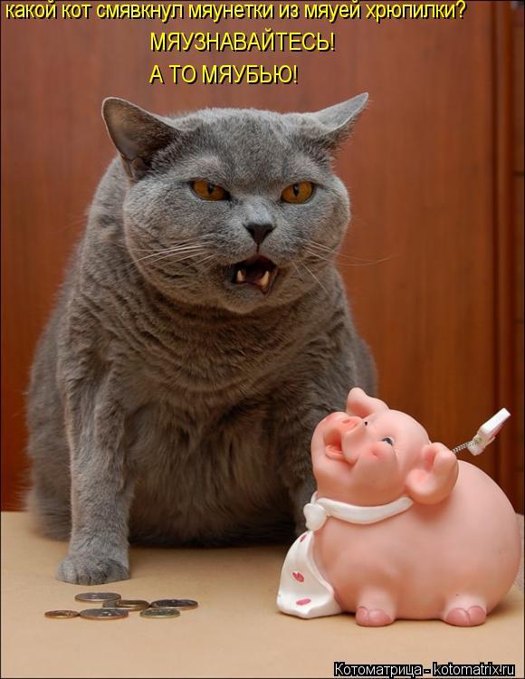 Котоматрица: какой кот смявкнул мяунетки из мяуей хрюпилки? МЯУЗНАВАЙТЕСЬ! А ТО МЯУБЬЮ!